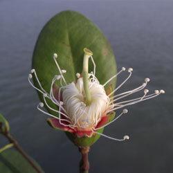 nature wildlife - sundarbans
