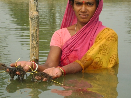 Women in Seaweed Culture at Jharkhali