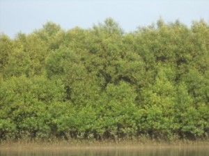 Nikarighata plantation site
